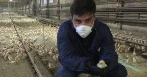 I nostri investigatori mostrano la realtà degli allevamenti a Piazza Pulita