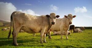 Il gigante del latte Dean Food chiude l'attività mentre le alternative vegetali crescono