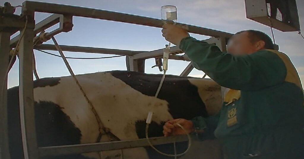 Antibiotici nel latte: dati allarmanti!