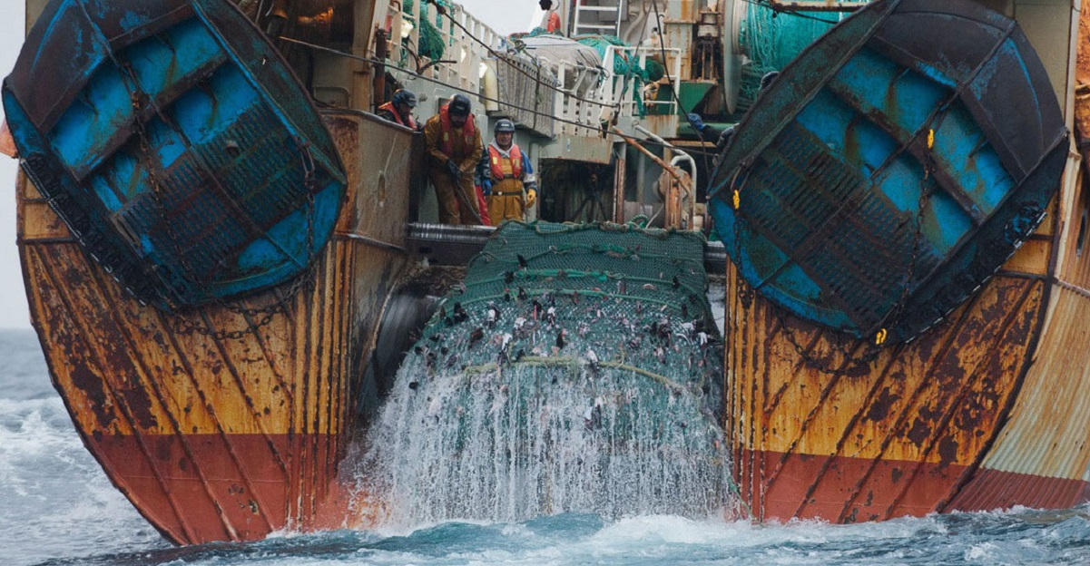 pesca intensiva