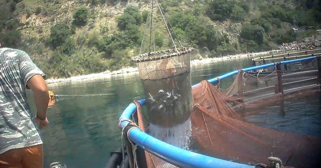 NUOVA INDAGINE - In Grecia dentro gli allevamenti di pesci