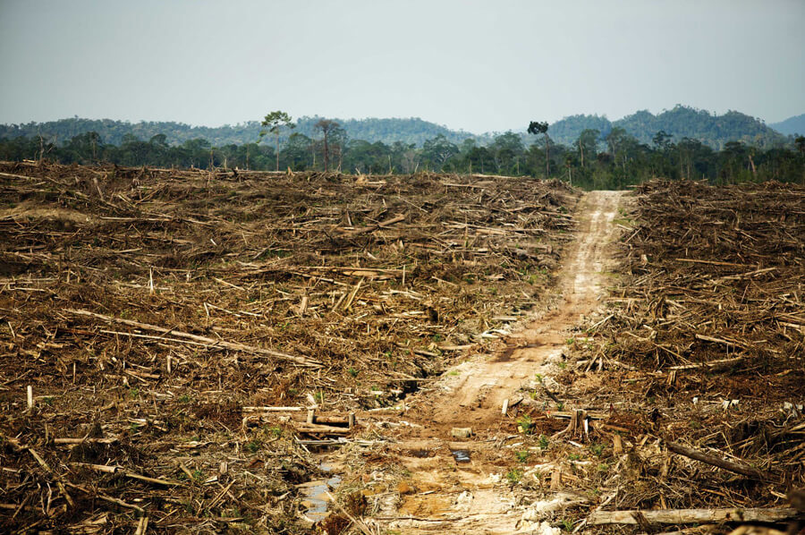deforestazione per mangimi e pascoli destinati agli allevamenti intensivi