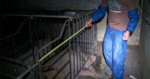 Gruppo Amadori patteggia per maltrattamento di animali dopo l'inchiesta di Report