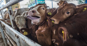 Animali bloccati per ore alle frontiere per l'emergenza covid-19