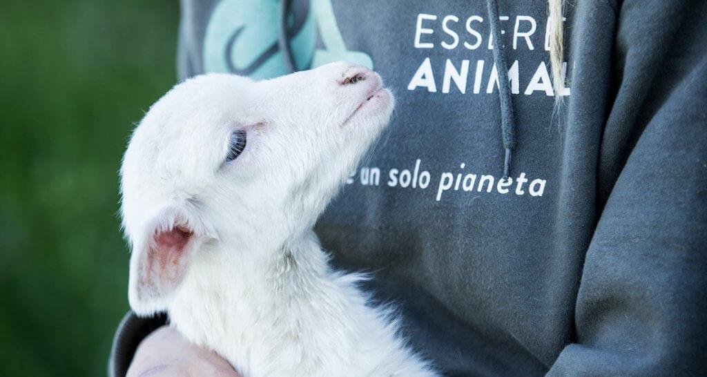 6 buoni motivi per donare il 5x1000 a Essere Animali