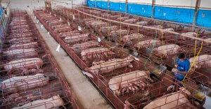 10 foto per capire l'enorme macchina dello sfruttamento degli animali