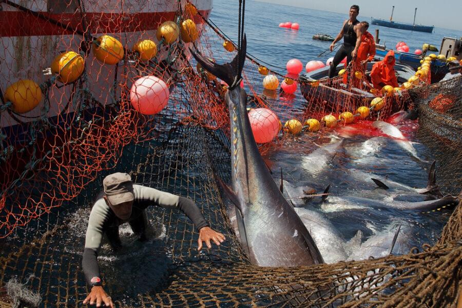 pesca tonni