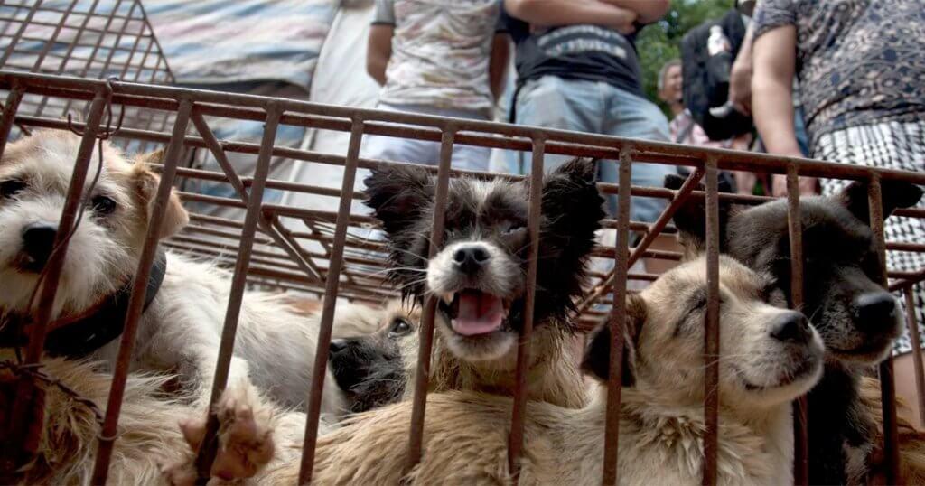 [Ufficiale] La Cina ha vietato il consumo di carne di cane