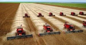La filiera della soia: un'industria creata per gli allevamenti intensivi