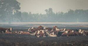 10 foto che mostrano il collegamento tra desertificazione e gli allevamenti intensivi