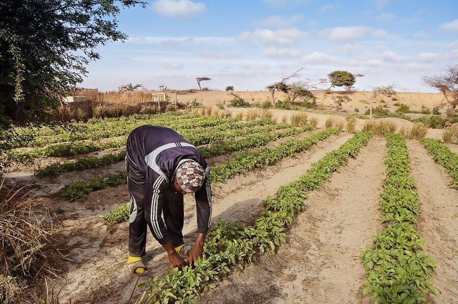 Coltivazione presso area desertificata