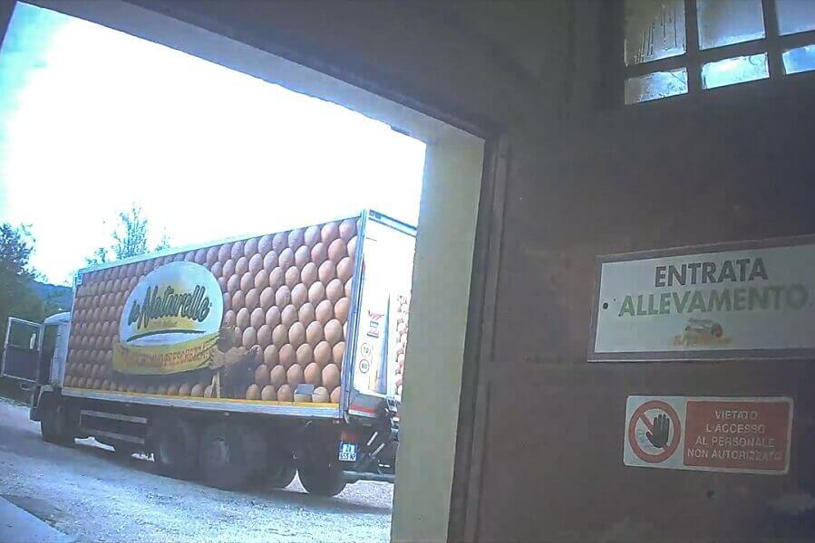 Camion di le Naturelle in un allevamento intensivo
