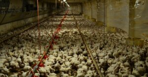 Gli investimenti nell'industria della carne sono a rischio: pandemico ed economico