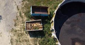 Cadaveri in putrefazione all'esterno di un allevamento di maiali