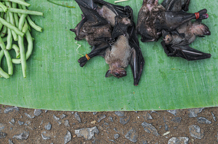 pipistrelli we animals essere animali