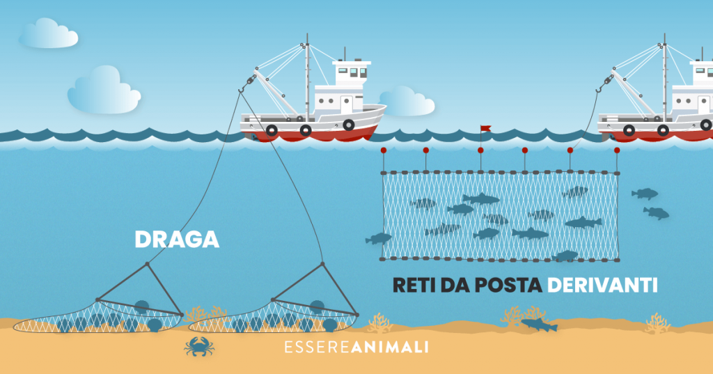 Infografica con la draga , che catturano i pesci sul fondale, e le reti da posta derivanti