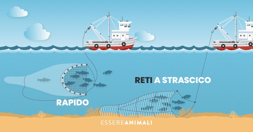Infografica sulla pesca a reti: quella rapida li cattura restando in mezzo all'acqua, quella a strascico parte dal fondale.