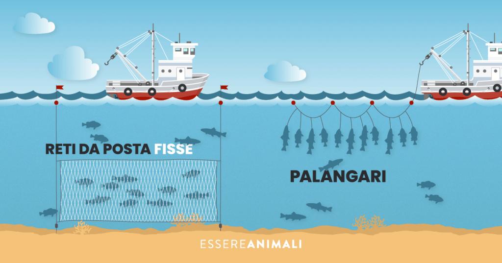 Infografica sulla pesca con le reti a poste fisse e tramite palangari