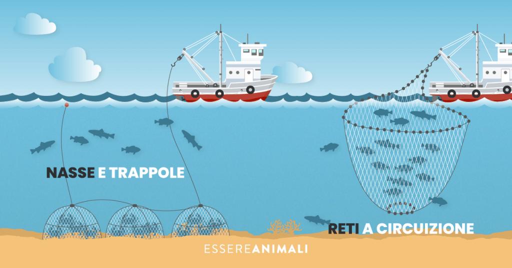 Infografica sulla pesca a nasse e trappole, che catturano i pesci sul fondale, e sulle reti a circuizione che risalendo dal fondo catturano i pesci.