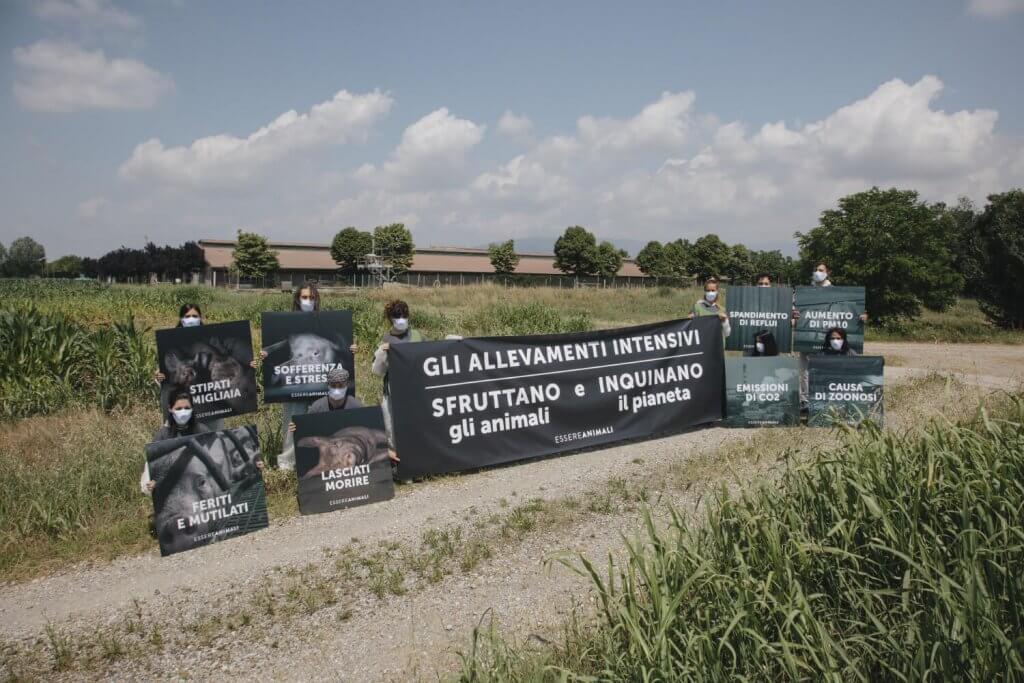 Attivisti di Essere Animali protestano davanti un allevamento intensivo di maiali a Brescia